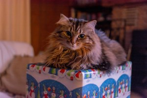 Three alternatives for giving an animal as a Christmas gift