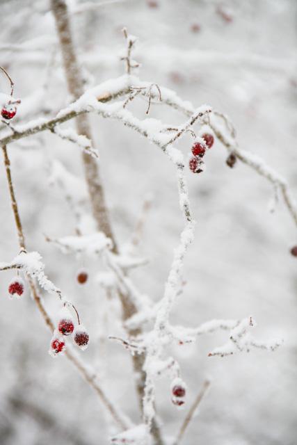 winter 2017 (13 of 20)