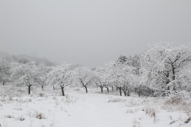 winter 2017 (6 of 20)