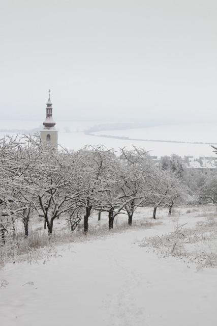 winter 2017 (8 of 20)