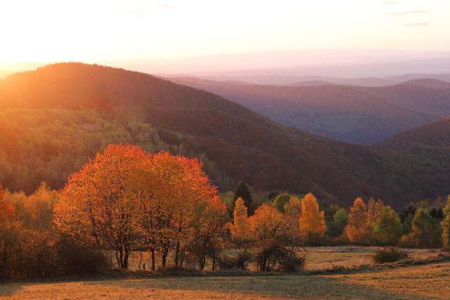 trees in autumn glory