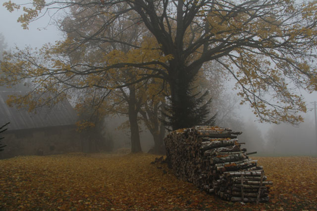 foggy fall morning