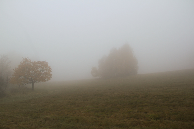 trees in foggy field
