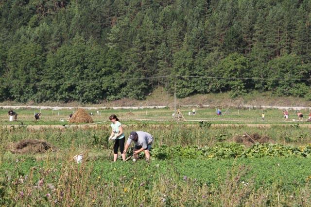 Workers in fields behind Liskova, Slovakia