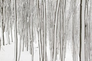 psychedelic tree trunks in snow