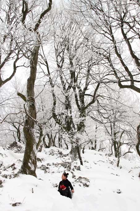 gnarled trees on cierna skala