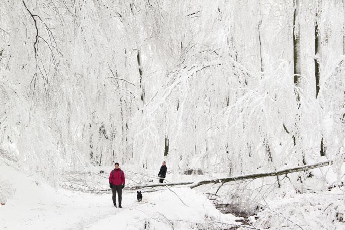 snow draping trees