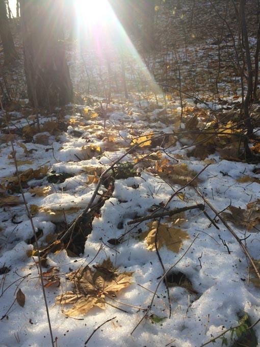 light on fallen leaves