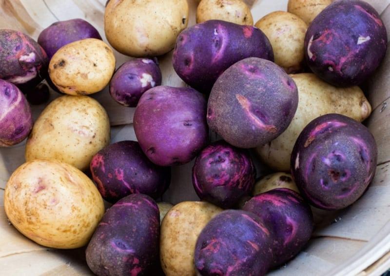 7 فوائد صحية مدهشة لـ البطاطس الأرجوانية