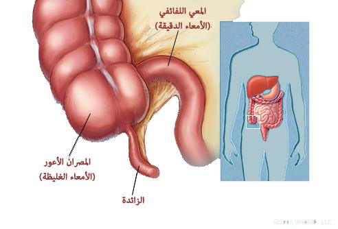 اعراض و انواع امراض القولون و علاجها المرسال