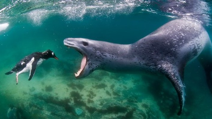 نتيجة بحث الصور عن نمر البحر