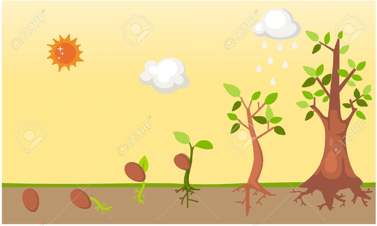 مراحل نمو الشجرة المرسال