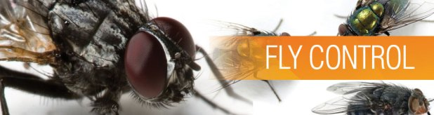 fly_banner