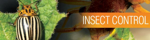 insect_banner (1)