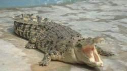 تفسير حلم تمساح يأكل شخص في المنام