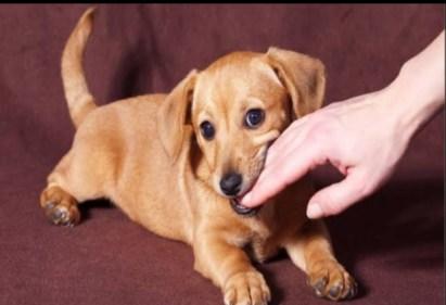 تفسير حلم عضة الكلب في اليد اليمنى في المنام