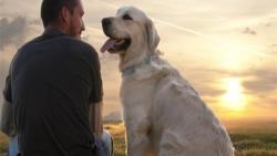 تفسير حلم الكلب في المنام للرجل الأعزب