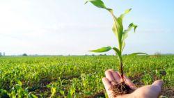 تفسير حلم الزراعة في المنام