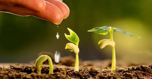 تفسير حلم الزراعة في المنام للعزباء