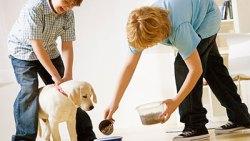 تفسير رؤية حلم إطعام الكلب في المنام