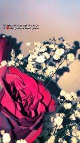 تغريدات عن الورد