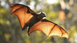 تفسير حلم الخفاش يطير في المنام