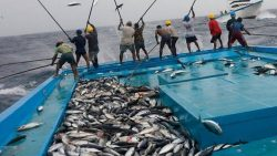 تفسير حلم الصيد للمتزوجين في المنام