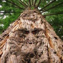 """Photo of بالفيديو.. شجرة """"الشيطان"""" تحترق من داخلها.. الشجرة تحترق بطريقة غريبة و مخيفة من دون أن تقع"""