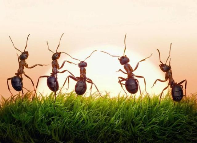 النمل عند سماع نغمة الآيفون