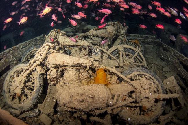 صور مذهلة لسفينة بريطانية غرقت في البحر الأحمر منذ 75 عاما