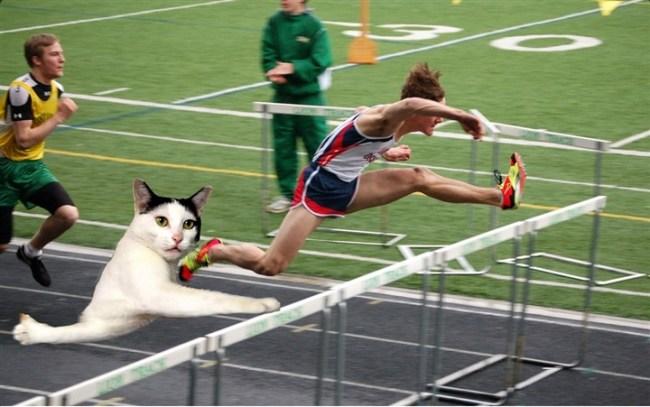 قطة تحرج نفسها تثير ضجة كبيرة على الإنترنت2