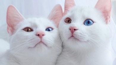 Photo of كيف أصبحت القطط حيواناتنا المحببة في المنزل؟