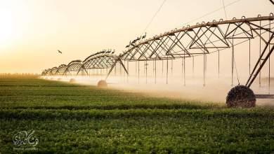Photo of الزراعة السودانية ومشاكلها ومناهج العلوم الزراعية بالكليات (2)