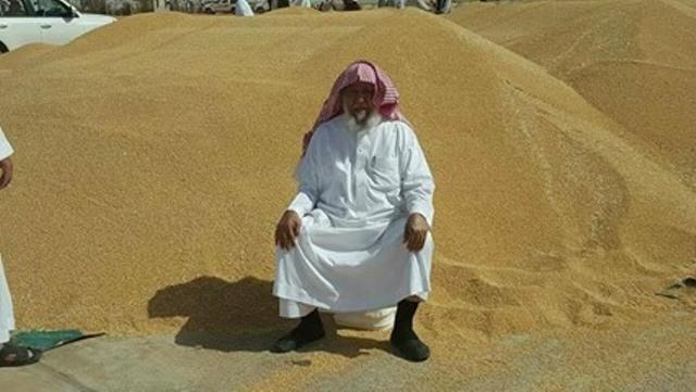 مشروع الراجحي لانتاج القمح  بشمال السودان . هذا العام مارس 2017