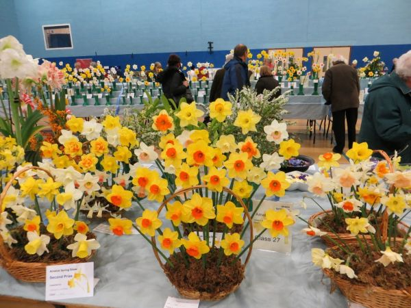 An image of daffodils in baskets at the Alnwick Spring Show