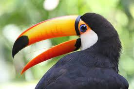 vogels bij Avifauna