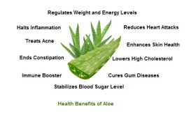 aloe health benefits - Aloe Vera & Aloe Arborescens
