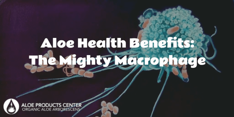 health benefits of aloe: the mighty macrophage