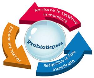 Probiotique - Infographie