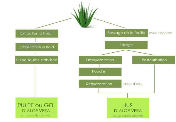 Jus ou gel aloe vera – Schéma des différentes pratiques de transformation