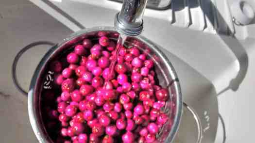 Use like cranberries in sauces or relishes or dry them for snacking. Delicious!