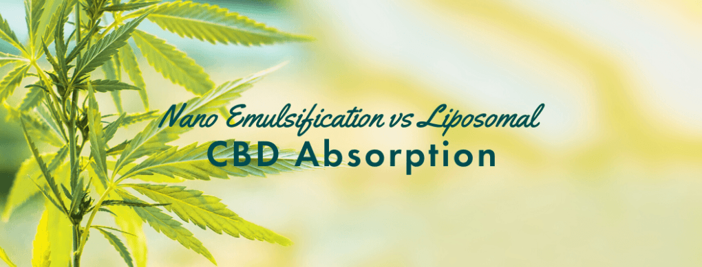 Nano Emulsification vs Liposomal CBD Absorption