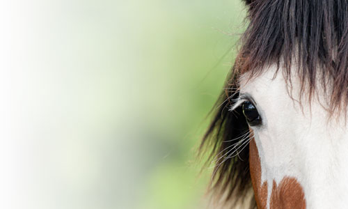 Equine Guided Mindfulness