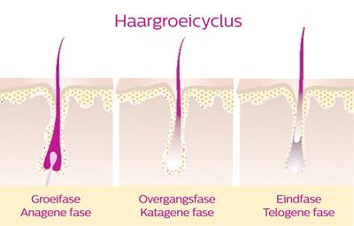 haargroeicyclus