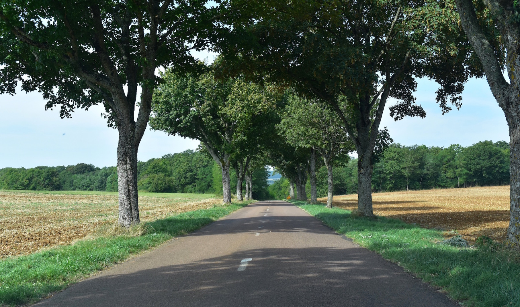 a-lovely-planet-burgundy-road