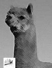 profilo alpaca