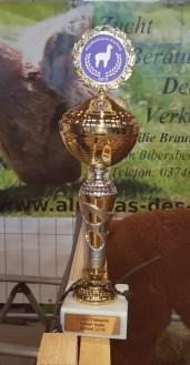 Color Champion braun