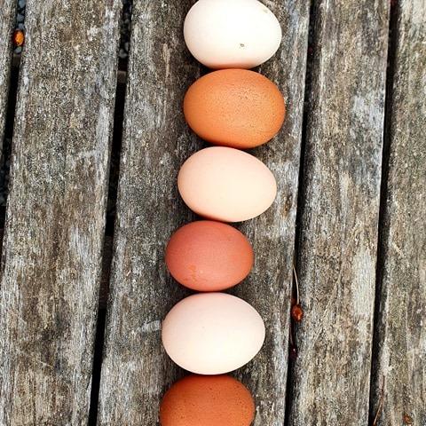 hofeigene Eier