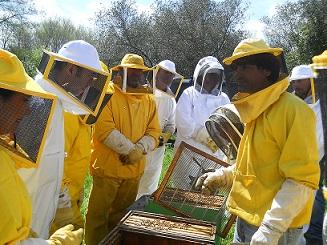 Pulizia radicale dall'infestazione di varroa: prova pratica del blocco di covata
