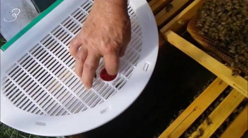 Tecniche di ingabbiamento invernale per contrastare la varroa